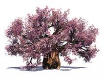 猴面包树巨大的查出的结构树 免版税库存图片