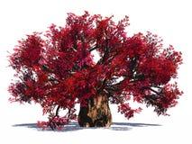 猴面包树巨大的查出的结构树 图库摄影