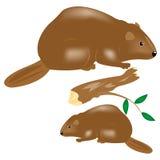 獾野生生物 免版税库存照片