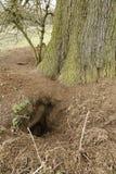 獾铺石 免版税图库摄影