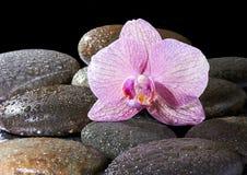 玄武岩石头和兰花 免版税库存图片