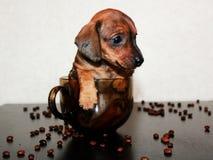率的小狗 免版税图库摄影