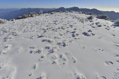 玉山国家公园 库存图片