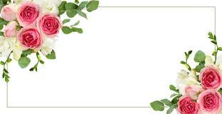 玉树叶子、小苍兰和桃红色玫瑰在壁角arran开花 图库摄影