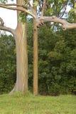 玉树彩虹结构树 库存图片
