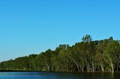 玉树是河的一个密林 免版税库存图片
