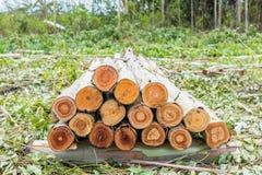 玉树木头 免版税库存图片
