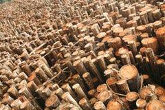 玉树木头 免版税图库摄影