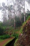 玉树森林有薄雾的马德拉岛 免版税库存照片