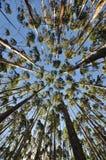 玉树森林酸值mak 免版税库存照片