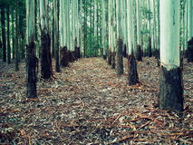 玉树森林 免版税库存照片