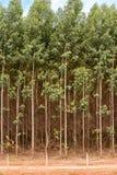 玉树种植园 库存照片