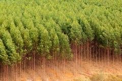 玉树种植园 免版税库存图片