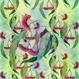 玉树-花和叶子,医药,香料厂和化妆用品植物 水彩 无缝的模式 库存例证