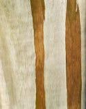 玉树 免版税库存照片