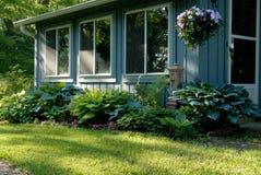 玉簪属植物树荫庭院 库存图片