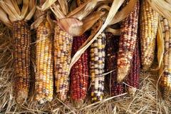 玉米万圣节感恩 库存照片