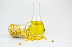 玉米与试管的引起的对氨基苯甲酸二生物燃料 图库摄影