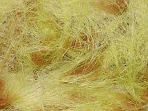 玉米丝绸  免版税图库摄影