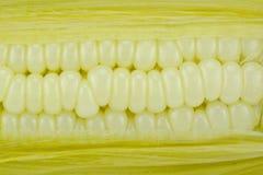 玉米两 免版税库存图片