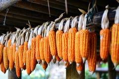 玉米为生活 库存图片