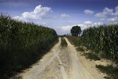 玉米之间的一条多灰尘的道路 免版税库存图片