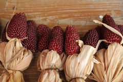 玉米五颜六色的印第安玉米 图库摄影
