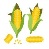 玉米传染媒介例证 玉米耳朵或玉米棒 库存图片