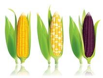 玉米传染媒介例证 图库摄影