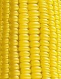 玉米例证宏观成熟向量 库存图片