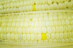 玉米六 库存图片