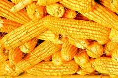 玉米关闭  免版税库存照片