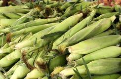 玉米农厂立场 库存图片