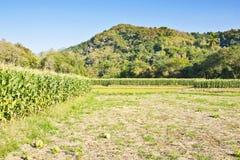 玉米农场十二 免版税库存照片