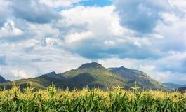 玉米农场和山 免版税库存图片