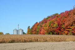 玉米农场 库存照片