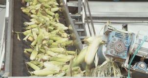 玉米加工厂 影视素材