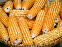 玉米卖在农场的干金瓜 免版税库存照片
