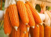 玉米卖在农场的干金瓜 库存图片