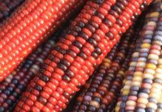 玉米印地安人 库存图片