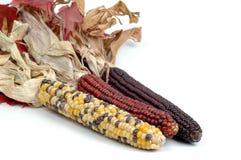 玉米印地安人 免版税库存图片