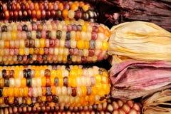 玉米印地安人 免版税库存照片
