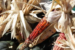 玉米印地安人 图库摄影