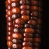 玉米印第安红色 免版税库存照片