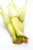 玉米吃剥壳的准备好的甜点对白色 免版税库存图片