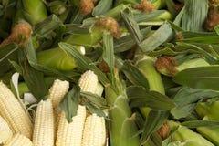 玉米和玉米壳 免版税库存照片