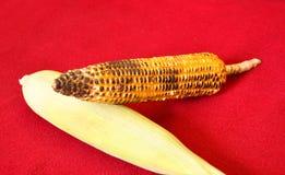 玉米和皮肤 免版税库存图片