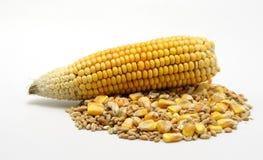 玉米和麦子 库存图片