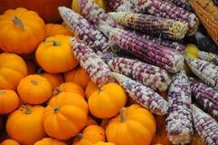 玉米和punkin 免版税库存照片