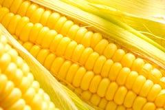 玉米图象 免版税库存图片